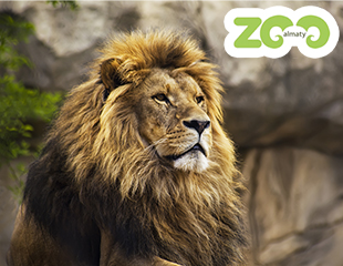 В самых добрых традициях семейного уикенда - посетите Алматинский зоопарк со скидкой 30%!