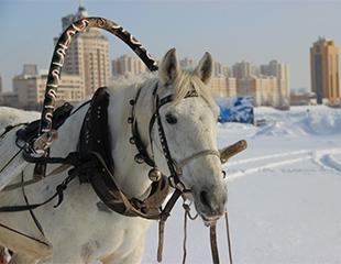 Зимние забавы! Катание на лошадях, пони, снегоходах, бананах и коньках со скидкой до 50% на набережной на реке Ишим!
