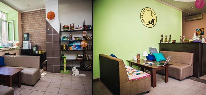 Purr Cat Cafe, 8