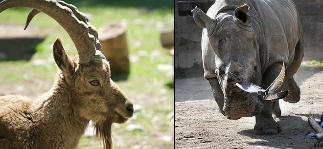 Алматинский зоопарк, 5