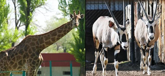 Алматинский зоопарк, 7