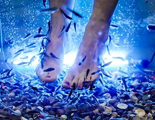 Для очищения и омоложения! FISHSPA — естественный пилинг с помощью живых рыбок GARRA RUFA, а также парафинотерапия, гидромассаж рук и ног со скидкой 50% в COS MED!