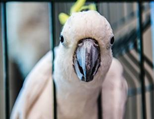 Прикоснитесь к настоящей природе! Скидка 50% на посещение контактного зоопарка Зверополюс!