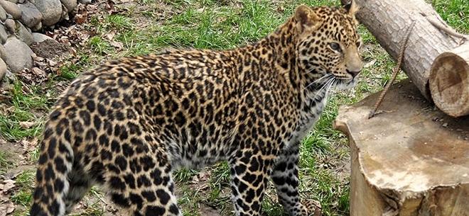 Алматинский зоопарк, 3