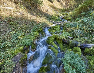 Тур на водопады в ущелье Горельник от компании I love Almaty mountains со скидкой 40%!