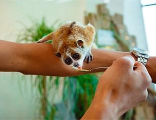 Стань ближе к природе! Посещение контактного зоопарка от парка развлечений Evrikum со скидкой 50%!