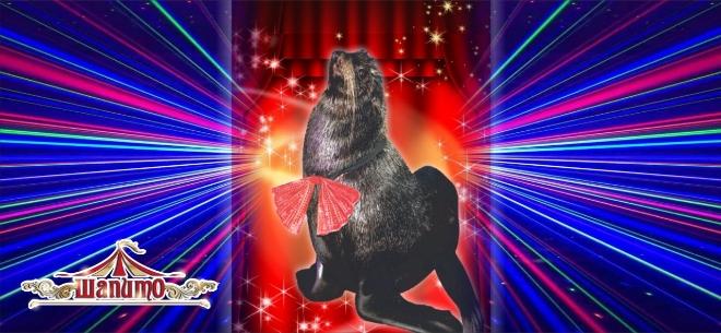 Новогоднее шоу в цирке «Шапито», 7