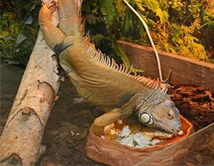 Так близко и так необычно! Посещение контактного зоопарка «Живая Экзотика» со скидкой 50%!