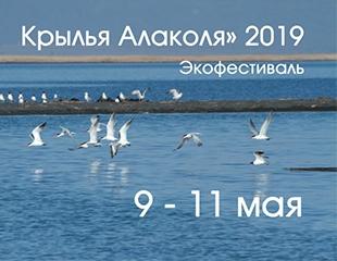 Фестиваль «Крылья Алаколя» с 9 до 11 мая в номерах и бунгало ЦСО «Пеликан» со скидкой 50%!