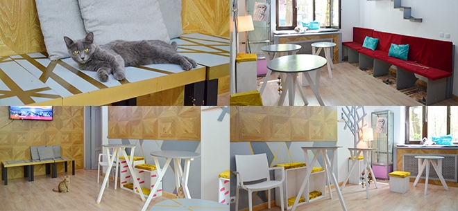 Solo Cat Cafe, 8