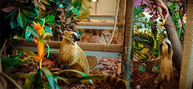 Контактный мини-зоопарк EVRIKUM Zoo, 3
