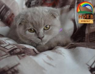 Котики ждут Вас! Посетите уютное пространство Cat Cafe на Кок-тобе со скидкой 60%!