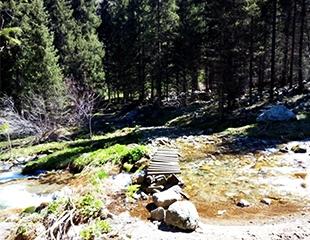 Отправьтесь в увлекательный поход в горы! «Ущелье Казачки, «Пятипалая поляна» и «Славянское капище» вместе с I Love Almaty Mountains! Скидка 40%!