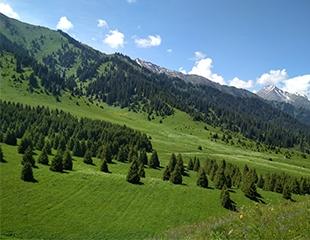 Самый популярный маршрут всех алматинцев! Тур Просвещенец — Кок-Жайляу — водопад «Батарейка» от I love Almaty mountains со скидкой 60%!