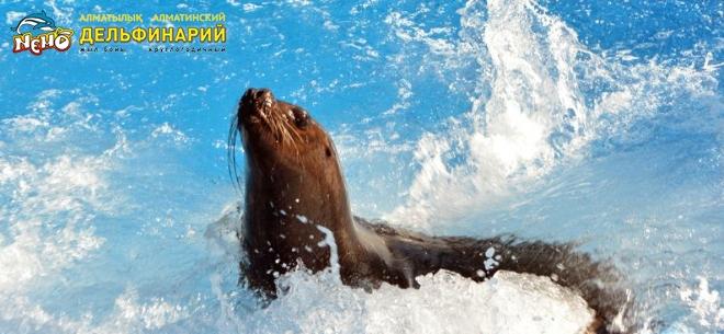 Дельфинарий Nemo, 2