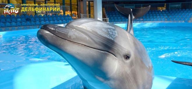 Дельфинарий Nemo, 3