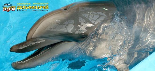 Дельфинарий Nemo, 7