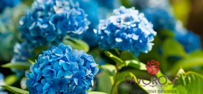 Цветочный магазин FAVOROSE , 4