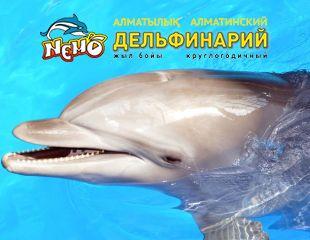 Весёлое шоу «Новогодняя сказка» с артистами и морскими обитателями в алматинском дельфинарии Nemo со скидкой 20%!