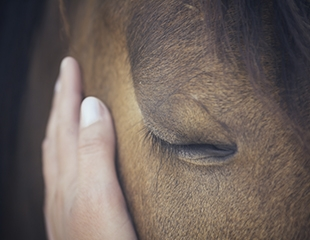 Для детей и взрослых! Конные прогулки, катание на Алматинском ипподроме и фотосессии с лошадьми конного клуба «Аргымак» со скидкой 50%!